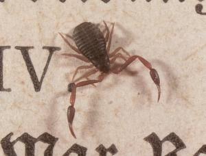 Book Scorpion